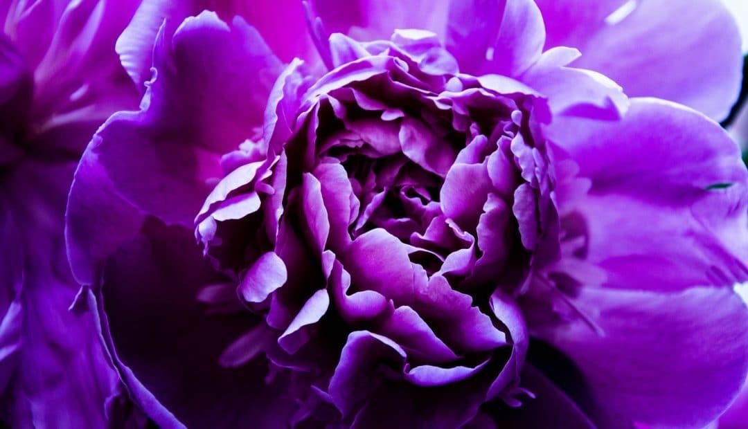 Comment faire du violet ?